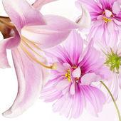 Květinový letní karta