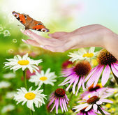 Spring beautiful nature background
