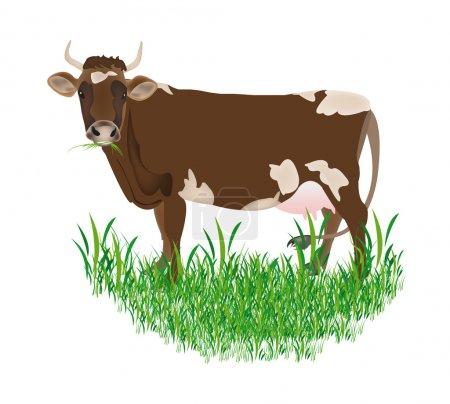 Illustration pour Vache laitière sur fond blanc Illustration vectorielle - image libre de droit
