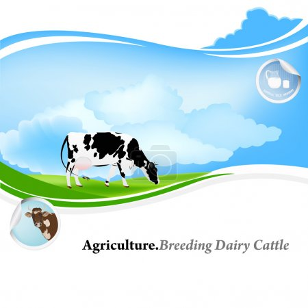 Illustration for Agriculture.Breeding dairy Cattle.Vector background - Royalty Free Image