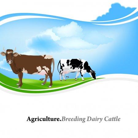 Illustration pour Animaux de ferme, Agriculture.Elevage de bovins laitiers.Contexte vectoriel - image libre de droit