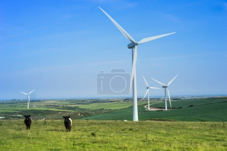 Wind farm with grazing cattle and turbines