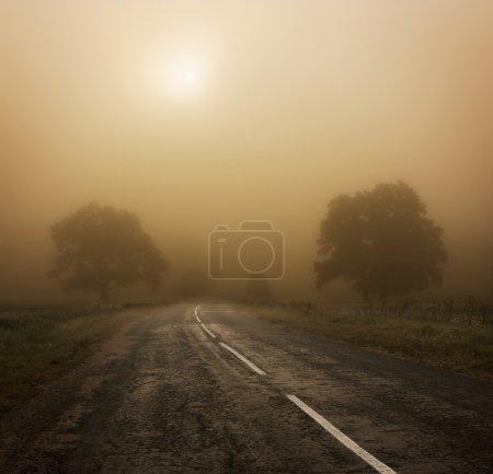 Photo pour Paysage d'automne avec les arbres et de la route dans le brouillard - image libre de droit