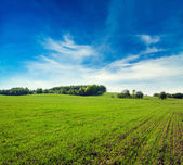 Spring Landscape with Green Field and Blue Sky