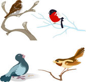 The illustration shows a variety of birds on branches in a cartoon style Done on separate layers isolated on white background