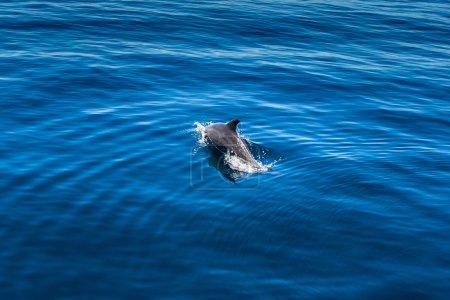 Dolphin swimming near Nosy Be, Madagascar...