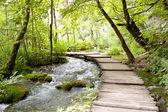 Plitvice lakes - wooden pathway.