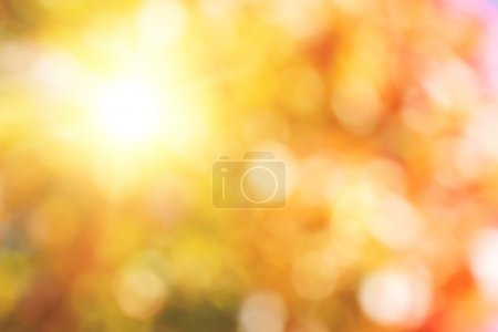 Photo for Autumnal natural bokeh with sun for background or backdrop - Royalty Free Image