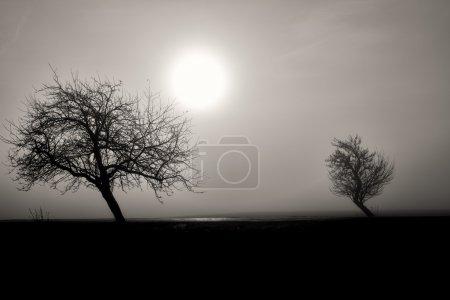 Photo pour Silhouette brumeuse de deux arbres, paysage noir et blanc avec soleil du matin - image libre de droit