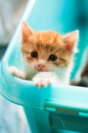 Foto de Gatito rojo mirando un poco triste porque no puede salir de la caja - Imagen libre de derechos