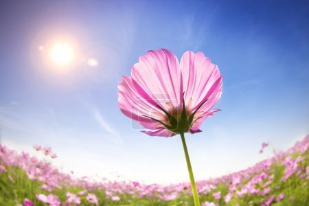 Photo for Beautiful daisies on the sunlight background - Royalty Free Image