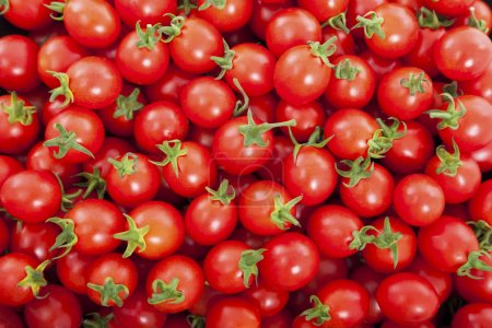 Photo for Group of fresh tomatoes - Royalty Free Image