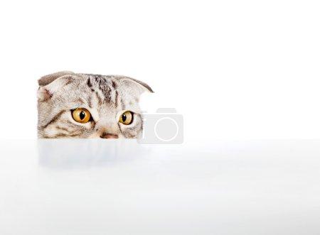 Photo pour Adorable chat fixait quelque chose sur la table - image libre de droit