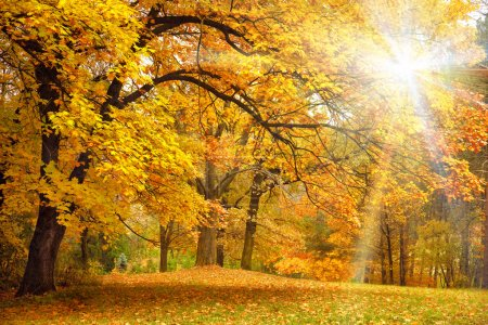 Gold Autumn with sunlight - Beautiful Trees in the forest