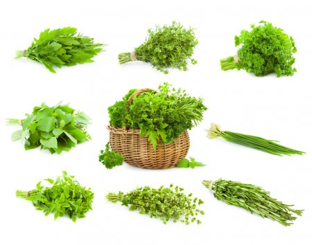 Photo for Big Set of Bunches and Basket of fresh Spice Herbs - Basil, Chive, Majoram, Oregano, Parsley, Thyme, Rucola and Rosemary - isolated on white background - Royalty Free Image
