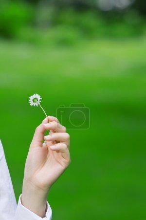 Mains féminines tenant une marguerite