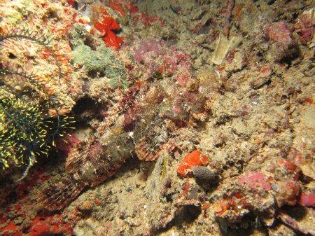 Photo pour Nudibranches noir et blancs sur un récif de corail naturel - image libre de droit