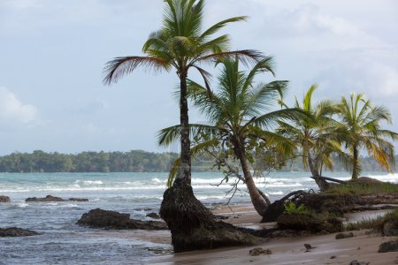 Coconut trees and big sea waves in Panama