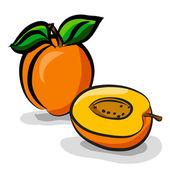 Apricot fruits sketch drawing vector set