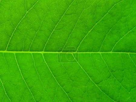 Photo for Green leaf. Background. - Royalty Free Image