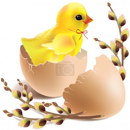 Easter baby chick hatched