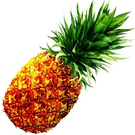 Photo pour Ananas isolé, peinture aquarelle sur fond blanc - image libre de droit