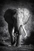 """Постер, картина, фотообои """"бык слона (артистическая обработка)"""""""