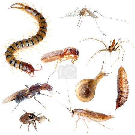 Photo pour Collection de punaises insectes parasites isolé - image libre de droit