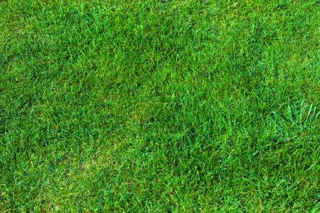 Photo pour Fond d'herbe verte - image libre de droit
