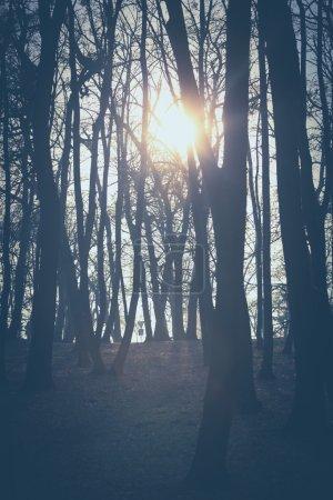 Photo pour Soleil à travers les arbres couleurs rétro - image libre de droit