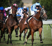 MELBOURNE - FEBRUARY 21: Horses in the finishing straight in the Ritchies Communities Benefits Plate