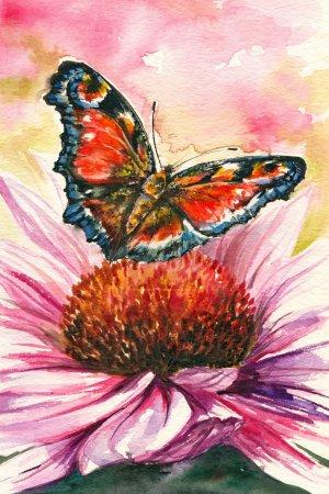Foto de Mariposa roja - pavo real europeo en coneflower púrpura (echinacea purpurea): cuadro he creado con acuarelas. - Imagen libre de derechos