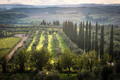 Panoramic view of scenic Tuscany landscape with vineyard