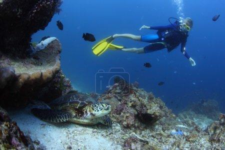 Photo pour Tournage sous-marin d'un plongeur observant une tortue de mer (Chelonioidea) sur le fond - image libre de droit