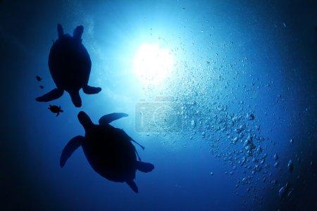 Photo pour Collage du monde sous-marin avec famille de tortues marines nageant en profondeur - image libre de droit