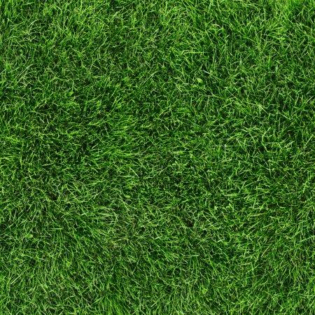 Photo pour Texture transparente de l'herbe verte. sans soudure en seulement horizontale dimention. - image libre de droit