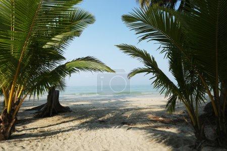 Photo pour Arbres tropicaux sable de plage et de palmiers - image libre de droit