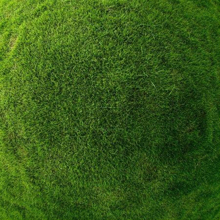 Photo pour Surface d'herbe verte - image libre de droit