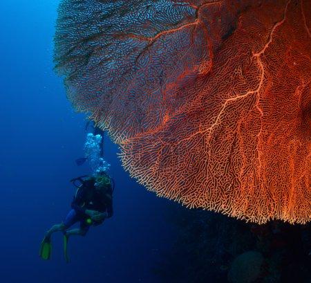 Photo pour Plongez dans la profondeur près de l'énorme corail rouge . - image libre de droit