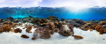 Photo for Underwater panorama of the vivid coral reef in tropical sea. Bali Barat National Park, Indonesia - Royalty Free Image