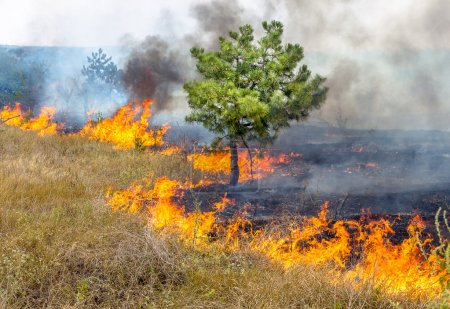 Severe drought. Forest fires in the dry wind completely destroy the forest and steppe. Disaster for Ukraine brings regular damage to nature and the region's economy.