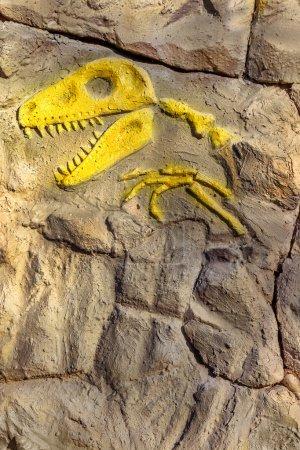 Head model of a prehistoric dinosaur fossils from the Mesozoic e