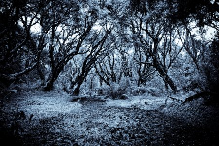 Photo for A path in the forest dark blue processed - Royalty Free Image