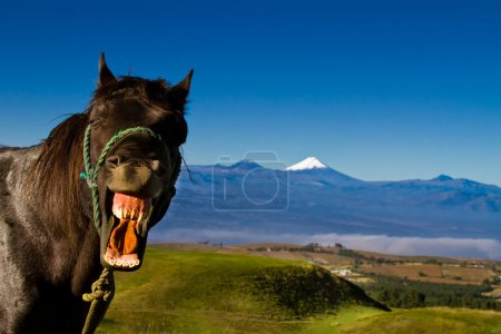 Photo for Funny horse close-up with mouth open and a silly expression on it's face - Royalty Free Image