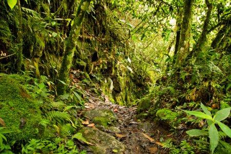 Photo pour Chemin de la forêt tropicale avec folliage dans le parc national, Équateur - image libre de droit