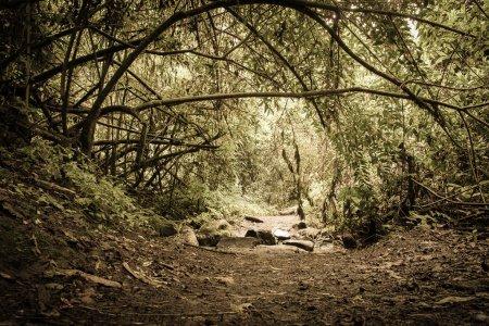 Photo pour Halloween hantée Forrest - image libre de droit