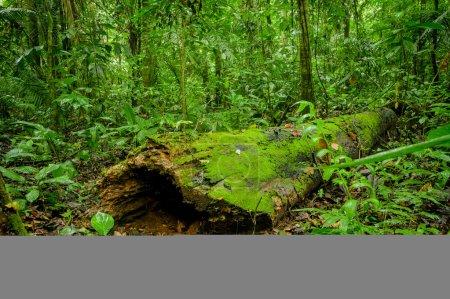 Photo for Tropical Rainforest Landscape, Amazon - Royalty Free Image