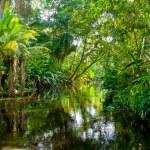 Amazon Jungle...