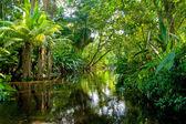 Amazonské džungle