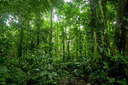 Photo pour Paysage de forêt tropicale, amazon - image libre de droit
